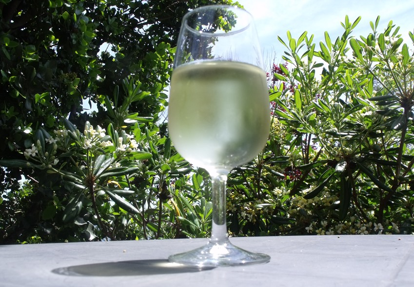 Glass of Sauvignon Blanc wine