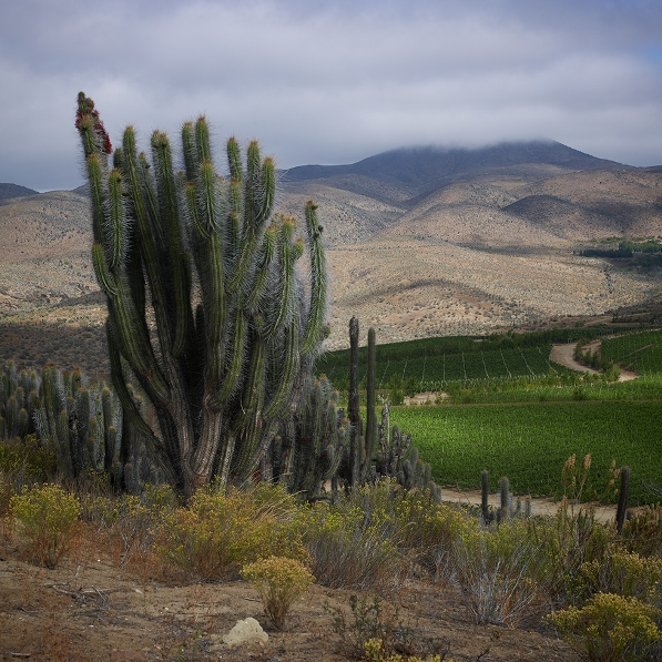 The vineyard at Talinay: an exceptional landscape (photo courtesy of Viña Tabalí)