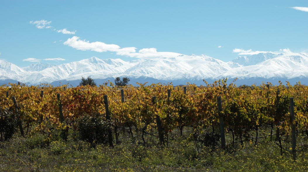 Vines and Andes