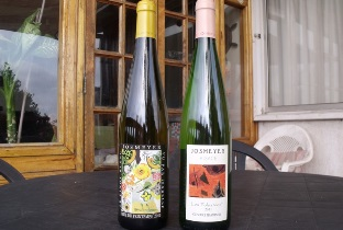 Tasting French wine – fruity white Alsace wines