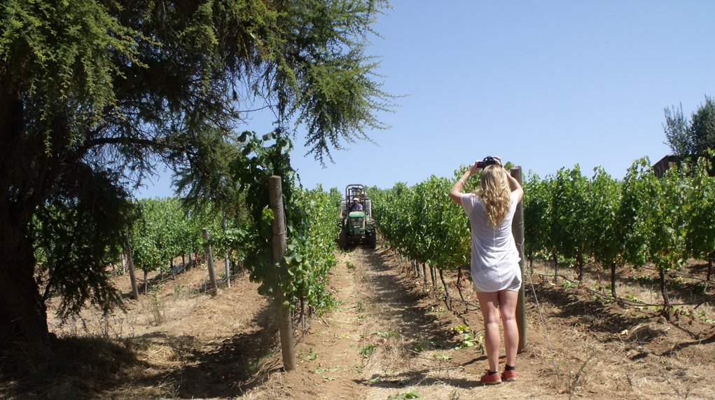 Amanda recording the harvest at Matetic