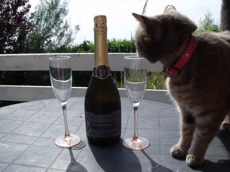 Cats like sparkling wine too!