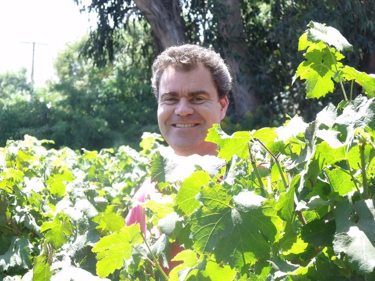 Guy tending the Carménère vines