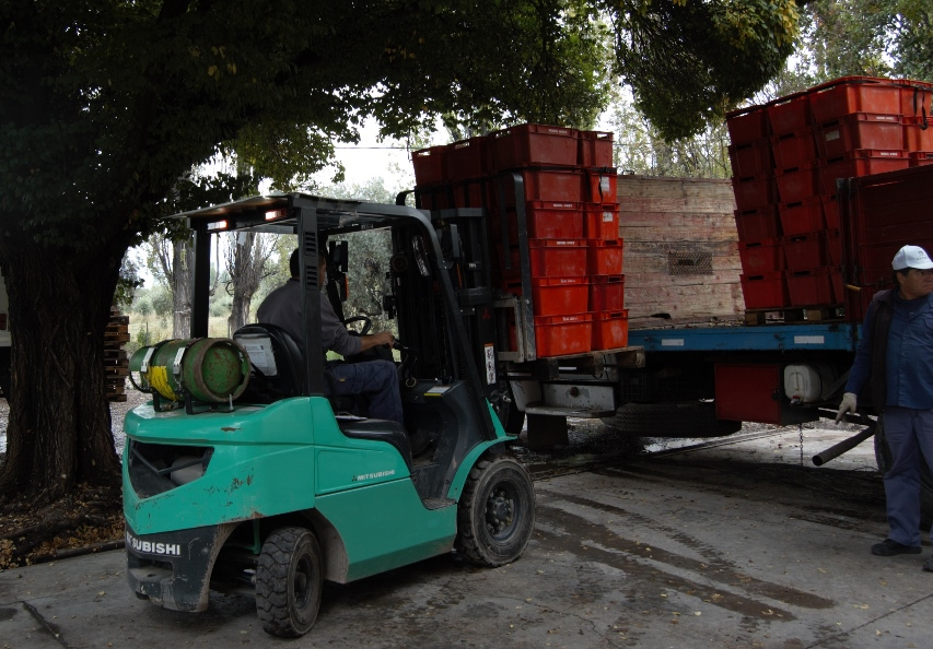 Moving the grapes on arrival