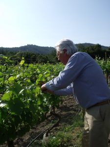 There's always work to do in the vineyard.